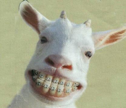 dentis10