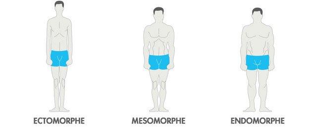 différents-types-de-morphologie-musculation